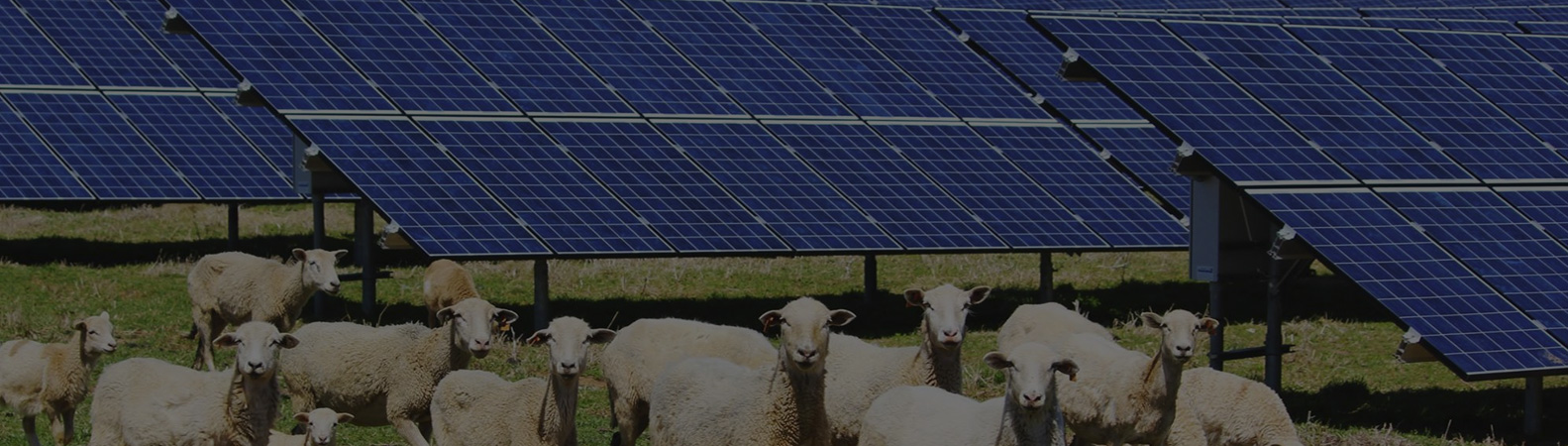 Farmers can now use solar power and say goodbye to electrical grid